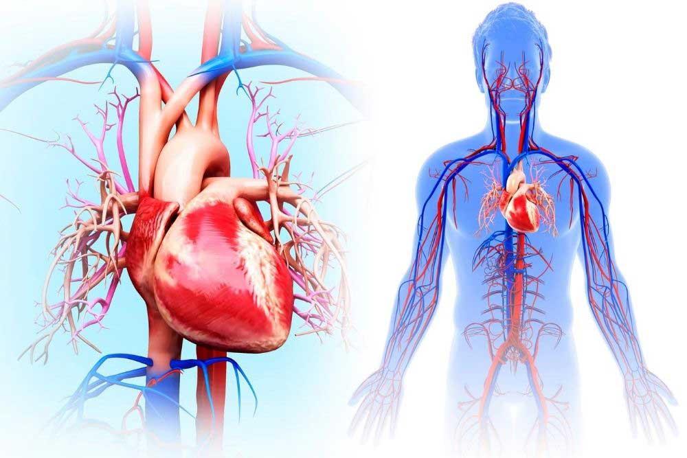 Heart Health Cardiovascular